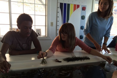 Justin Hooks and Lexi Garrabrant participate in an algae lab overlooked by Theresa Fukuda, Marine Science Instructor.