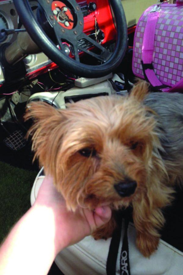 Senior Dakota Mells dog, Ivy, in his car before he went into school.